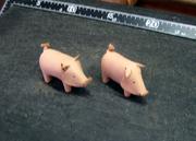 豚ちゃん 004.JPG