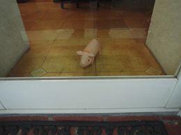 豚の特大5.jpg