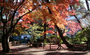 sakuo-2015.12.jpg